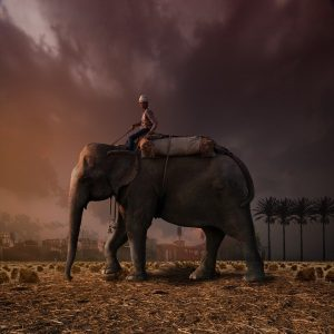 Motivation: It's All About Your Elephant
